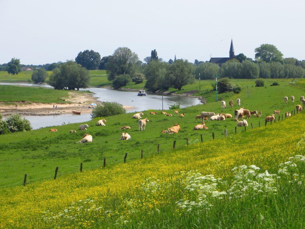 Een oude zijtak van de Rhein in Duitsland.