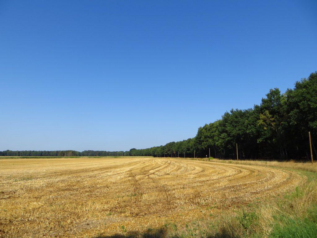 De graanoogst is al binnen begin augustus.