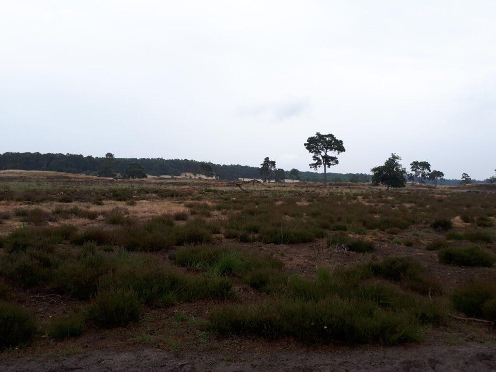 Nationaal Park De Loonse en Drunense Duinen.